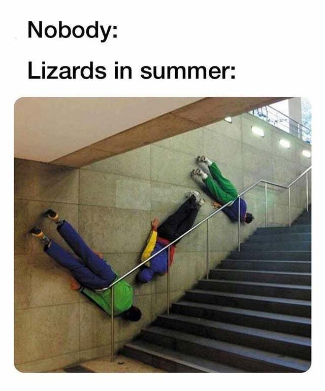 Lizards in summer - meme