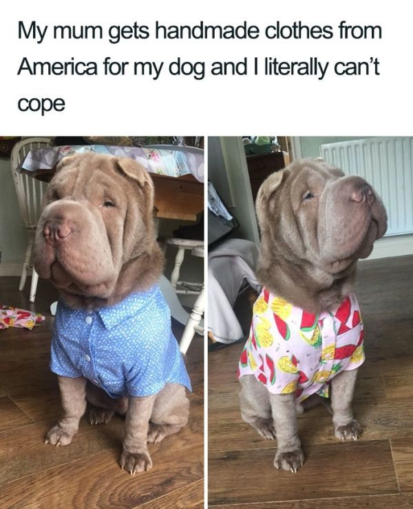 Another dog meme