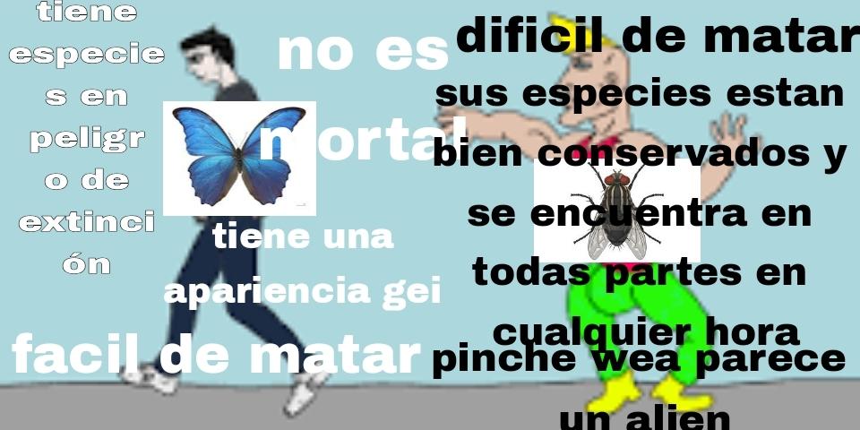 Virgen mariposa vs the chad mosca - meme