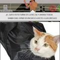 No gatito como pudiste terminar asi :'(