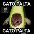 Gato aguacate
