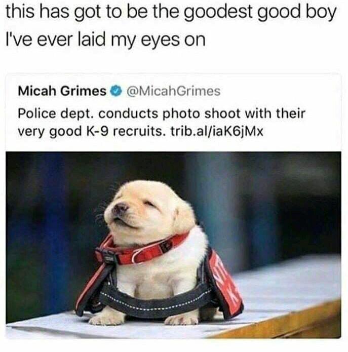 Doggerino - meme