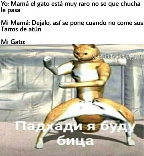 rre loco el michi - meme