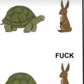 Probably the only time a turtle will win in a race