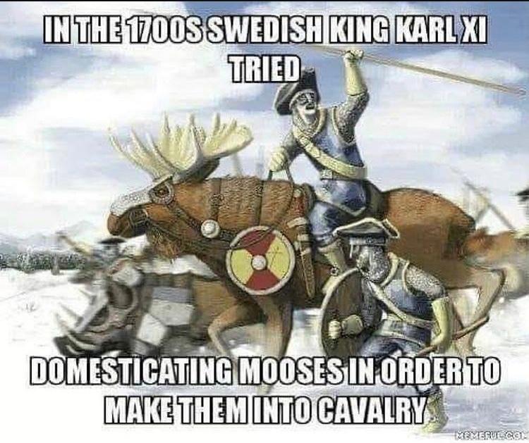 moose cavalry - meme