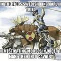 moose cavalry