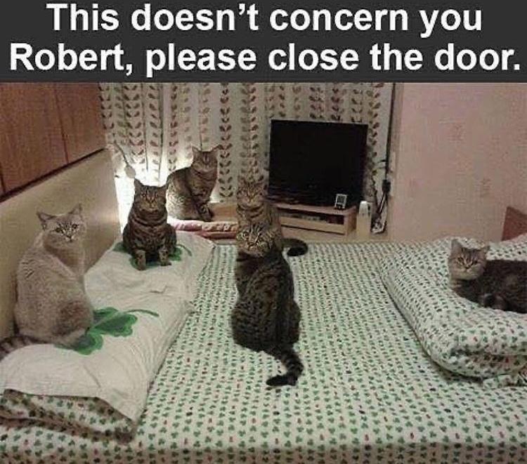 DO NOT DISTURB THE CAT COUNCIL - meme