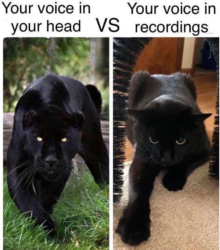 panther - meme