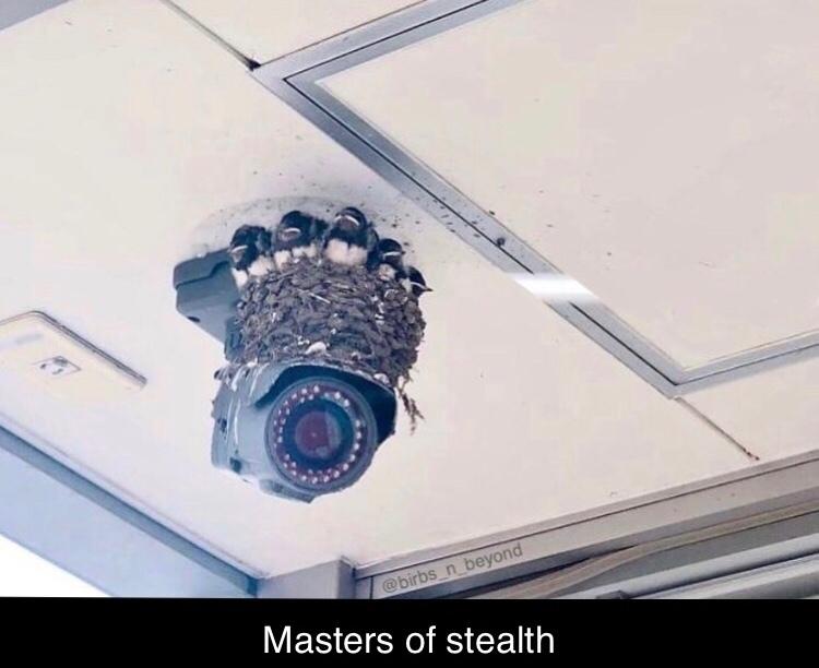 stealth 100 - meme