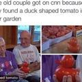 tomato duck
