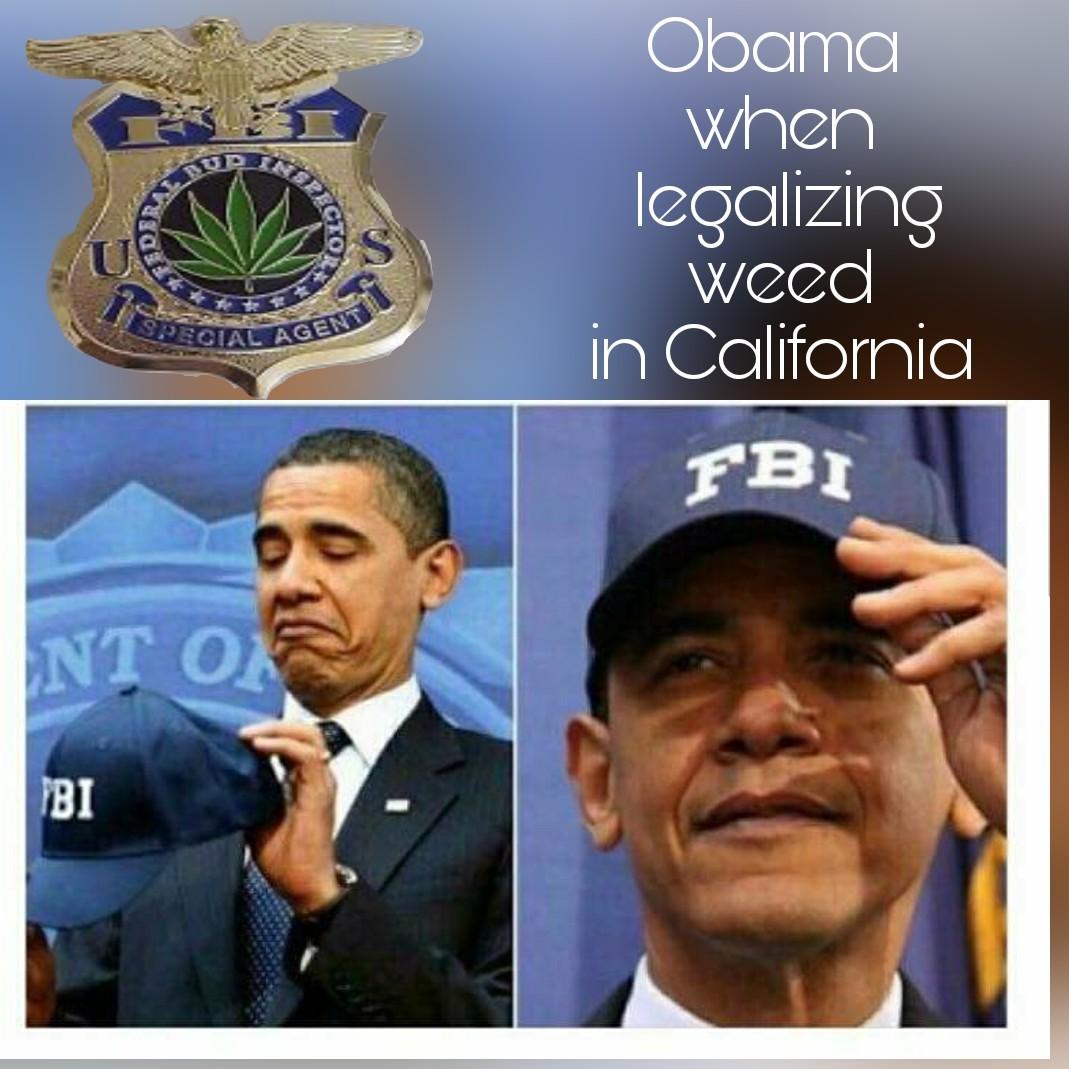 Federal bud investigator - meme