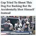 Ha ha ha ha ha stupid piggy