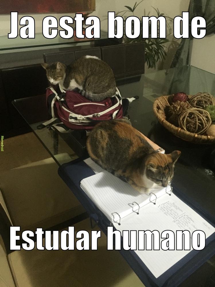 gatos, os animais mais sábios - meme