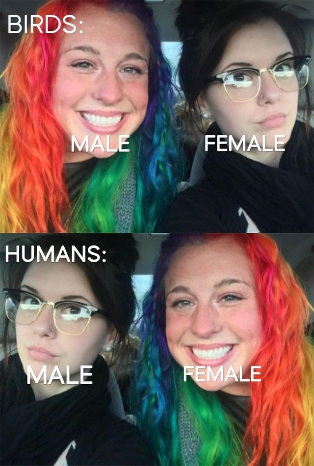 Colorful birds - meme