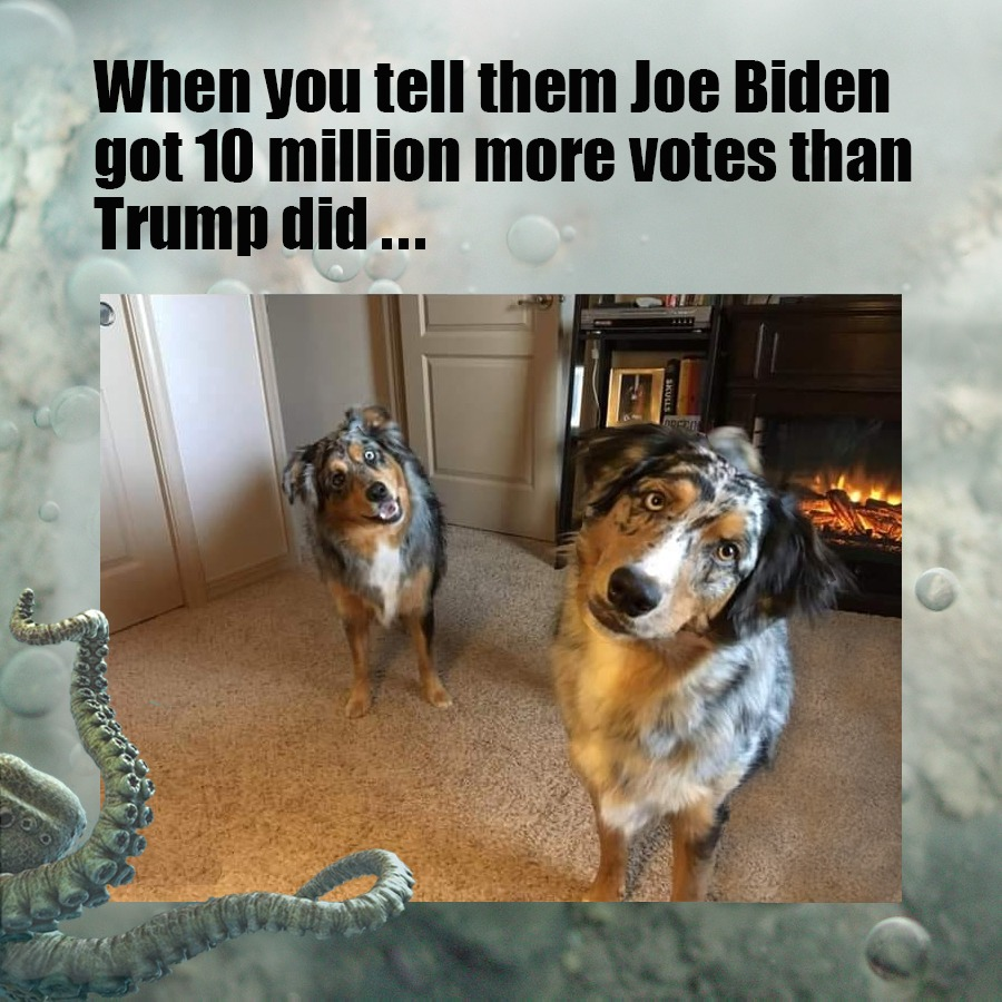 Trump Won, Joe - meme