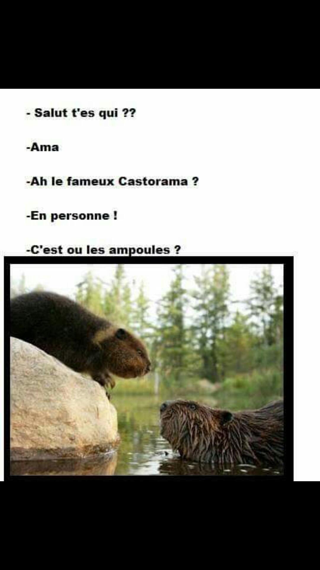 Castorama - meme
