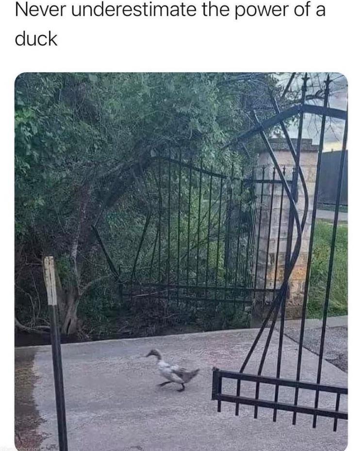 duck power - meme