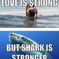 Shark very strong