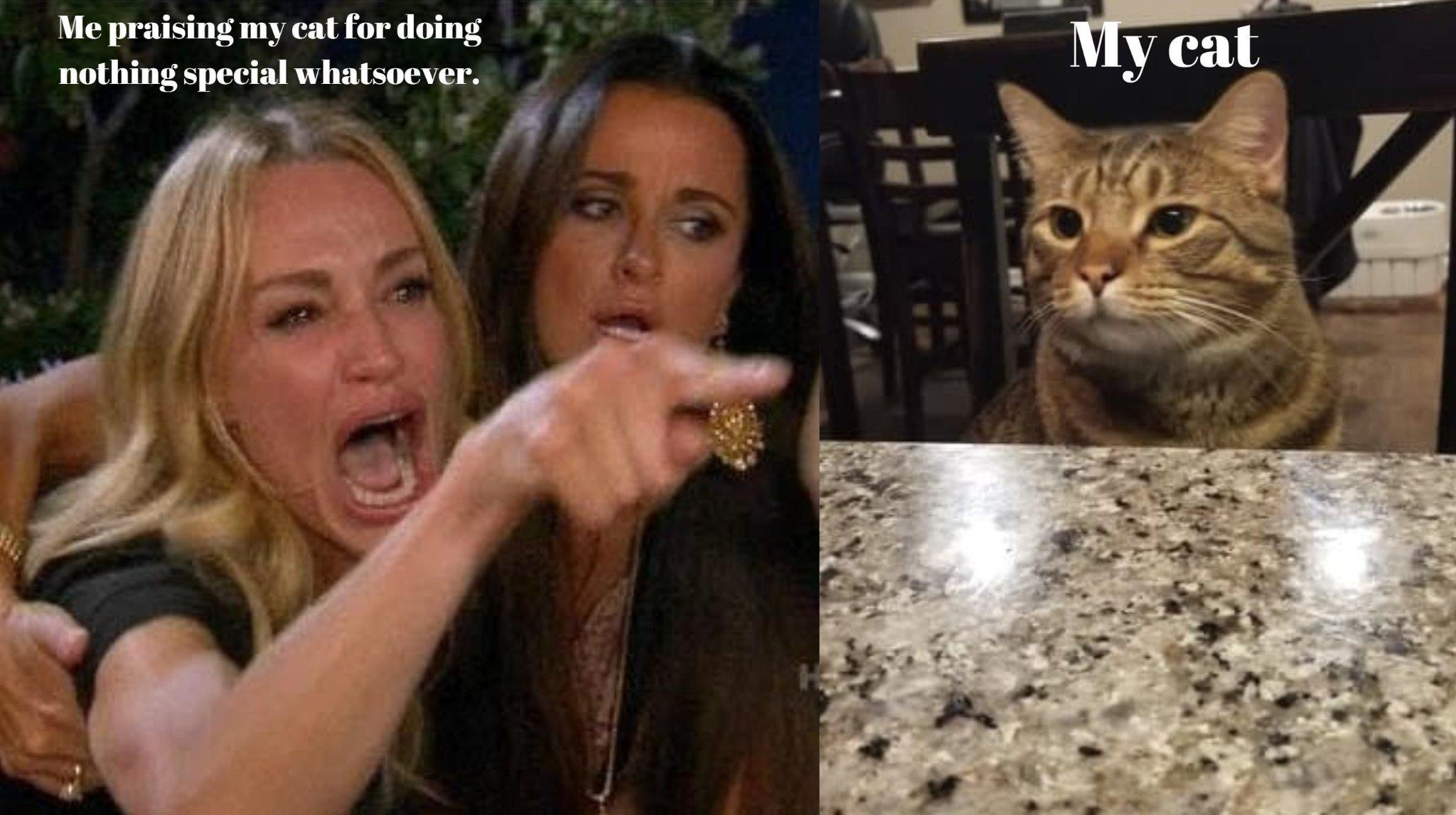My cat IRL - meme
