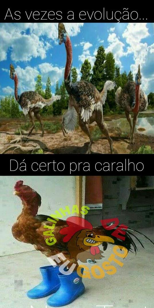 Seguinte meu parcero, não sei se a galinha evoluiu disso ae, mas eu não ligo tmb - meme