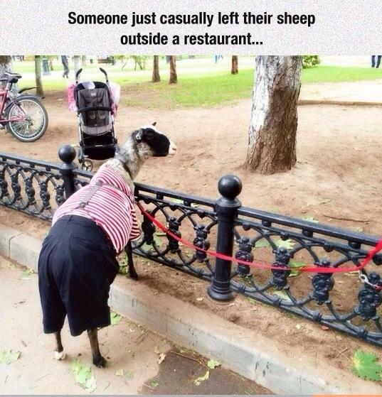 sheep - meme