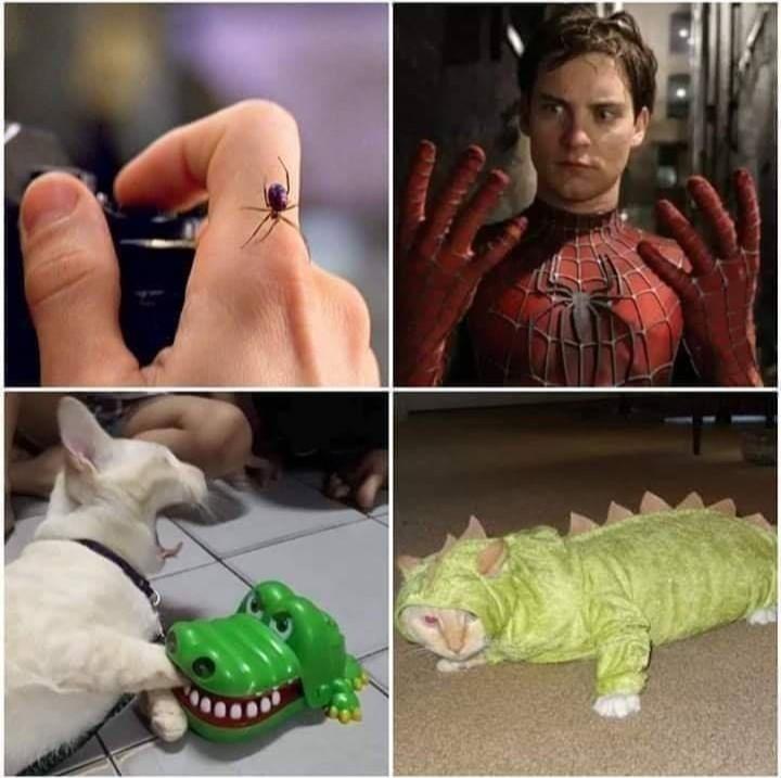 aligator dog - meme