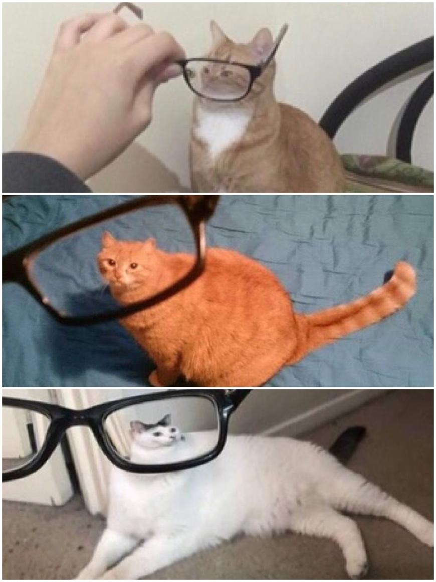 gatos hh - meme