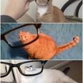 gatos hh