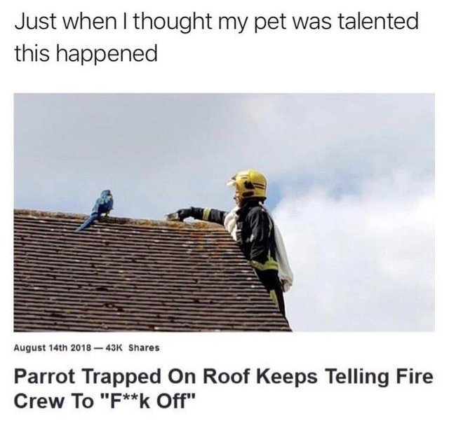 Parrot trapped on roof keeps telling fire crew to fuck off - meme