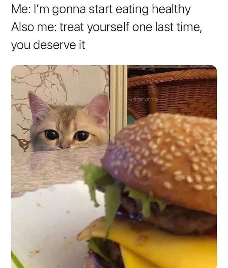 cat want cheeseburger - meme