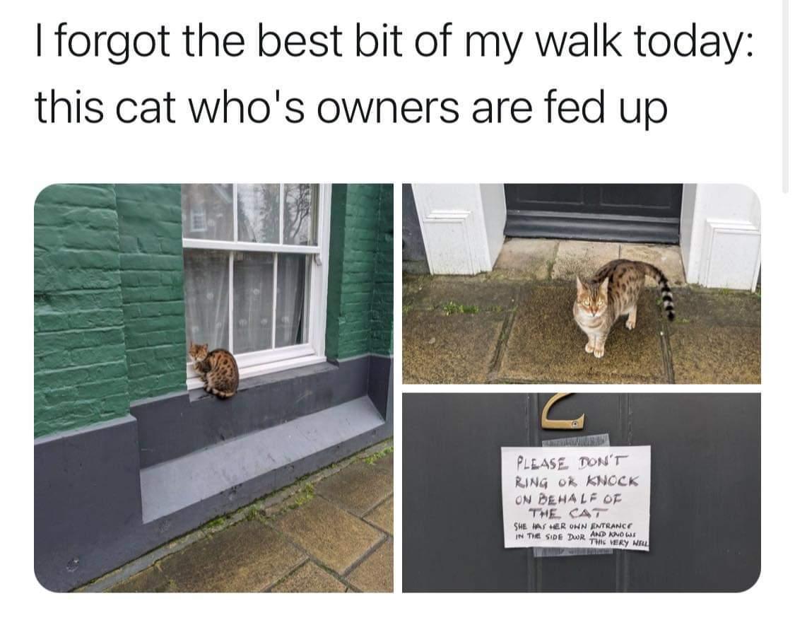 Ass cat.... - meme