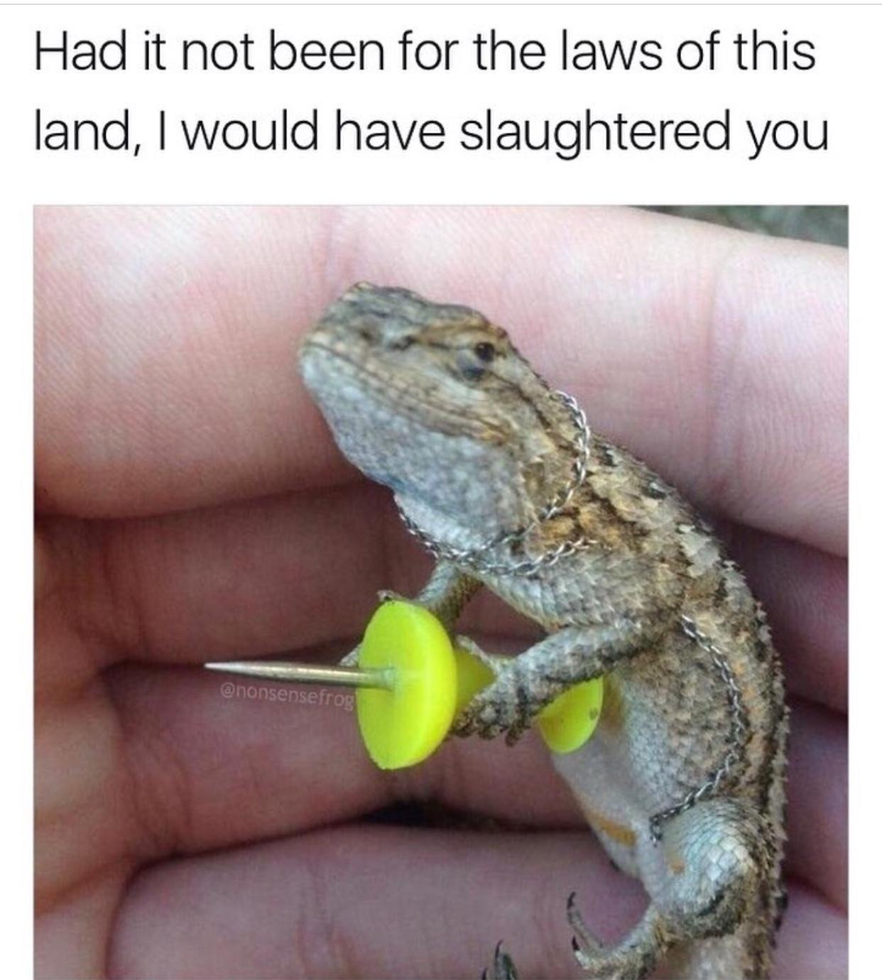 heh heh