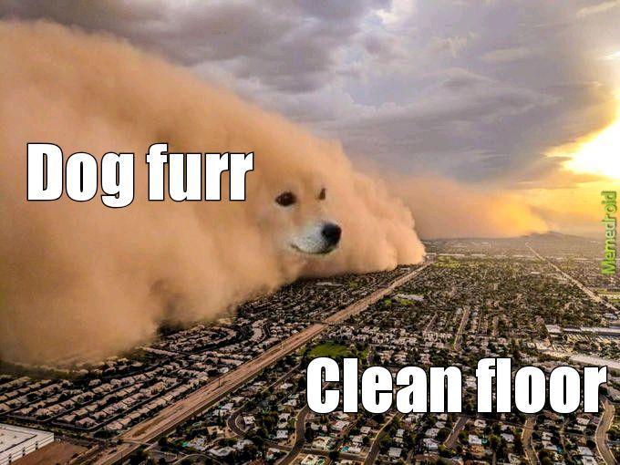 Dogz - meme