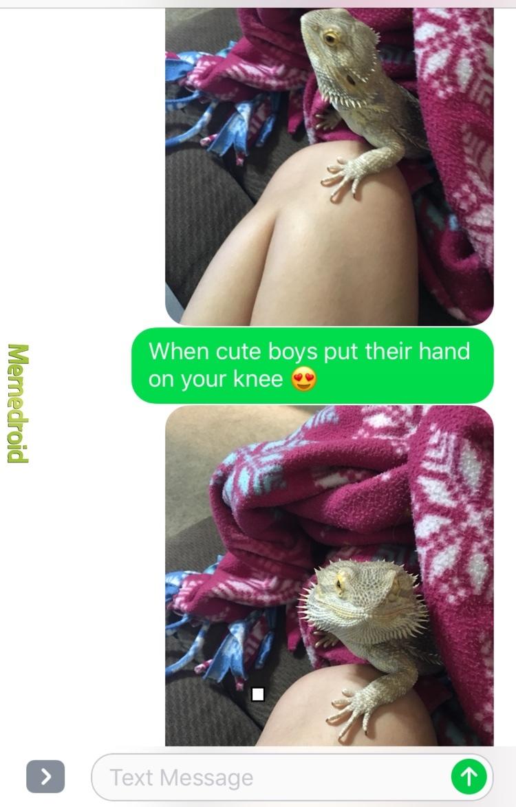 lizard love - meme