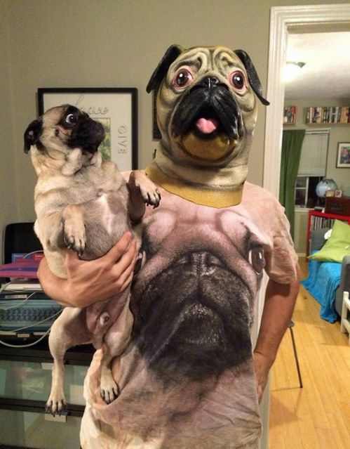 perro traumado jeje - meme