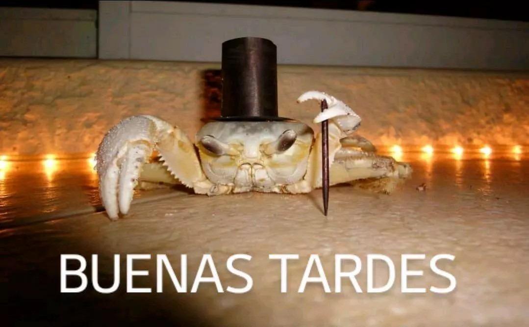 Buenas tardes - meme