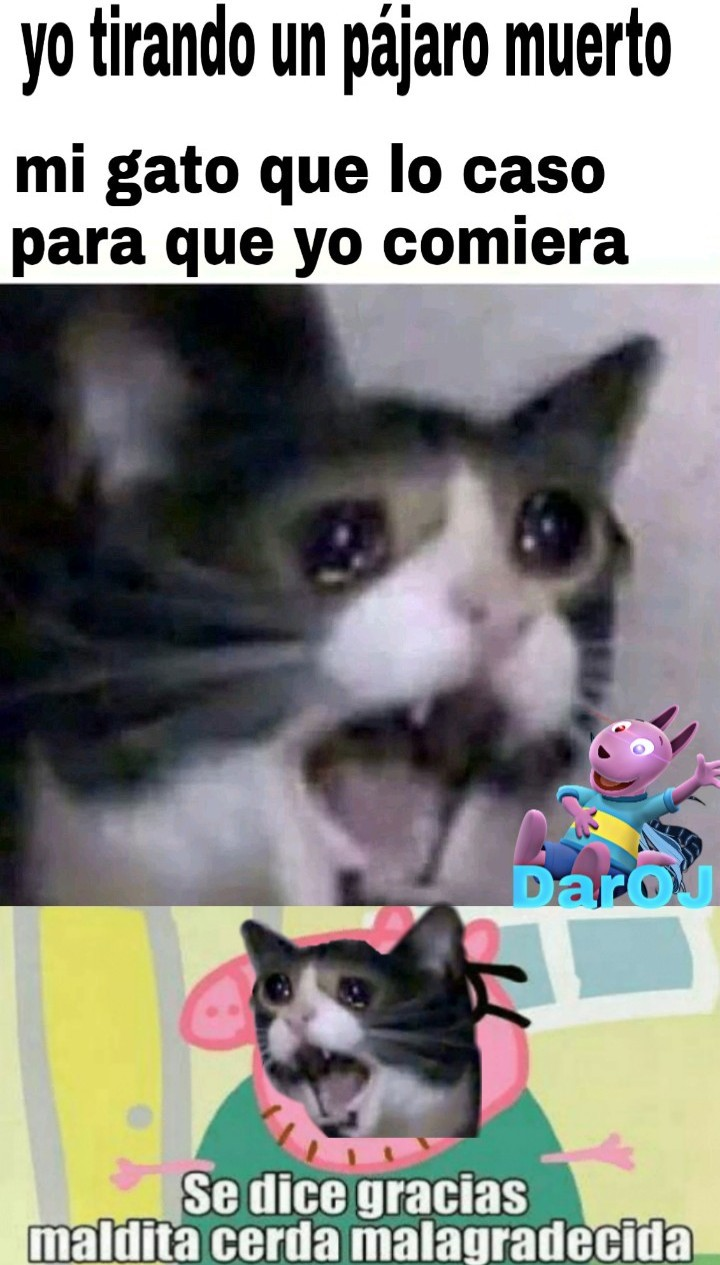 Se dice gracias cerda malagradecida - meme