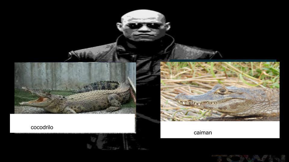 antes de que se confundan,los cocodrilos y los caimanes NO son la misma wea con un nombre diferente - meme
