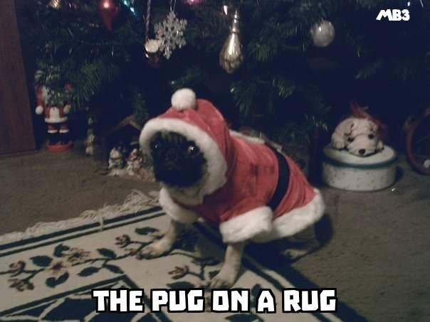 Pug on a Rug - meme