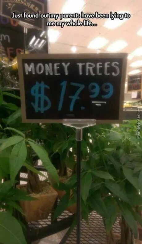 Money Trees - meme