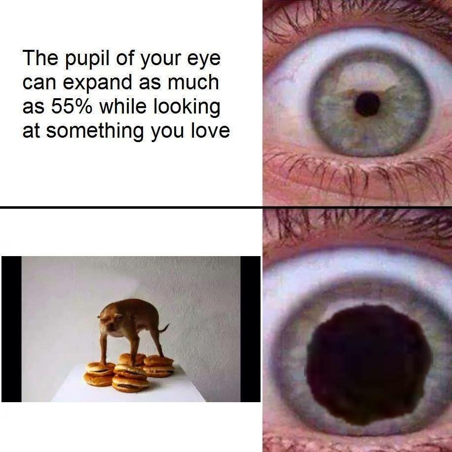 The eye. - meme