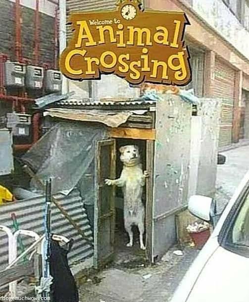 Animal crossing realista - meme