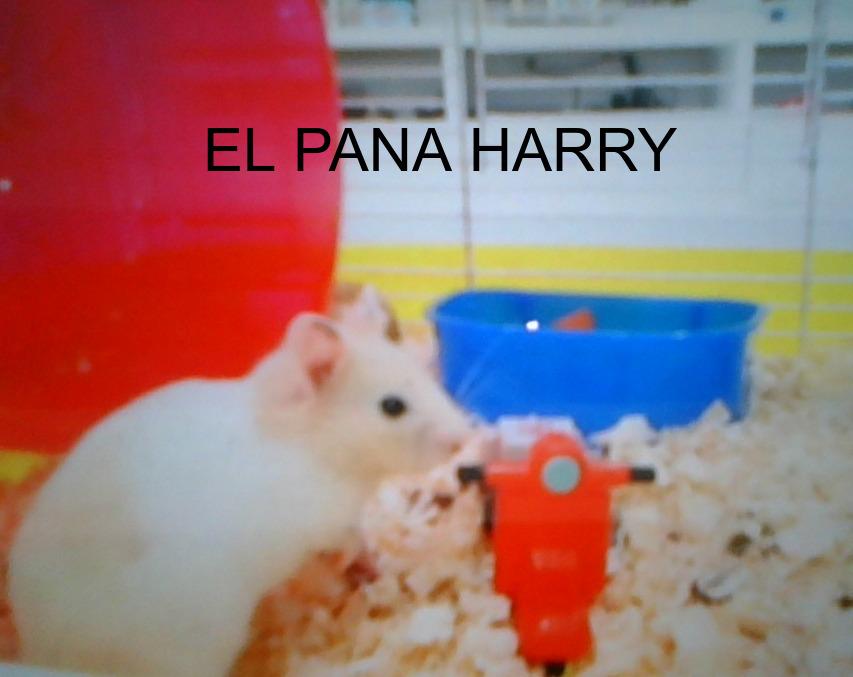 El pana Harry - meme