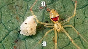 Araña :D - meme