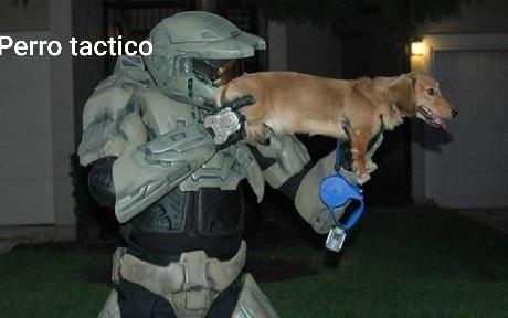 Perro tactico - meme