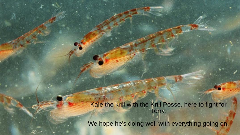 Kale the Krill - meme