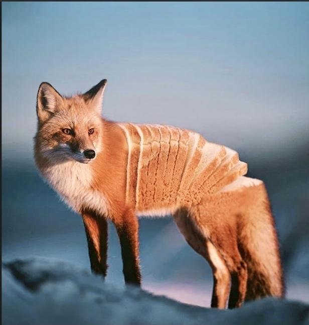 Yes, that is a domestic bread fox - meme