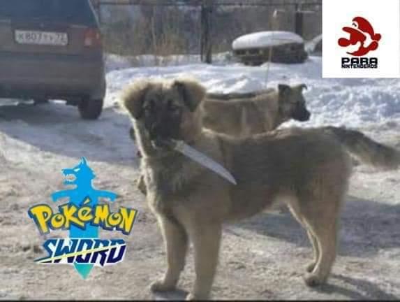 Pokemon sword - meme