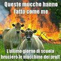 Mucche a scuola