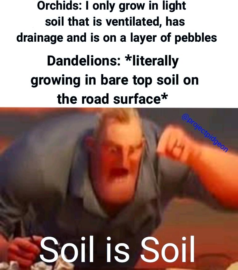 Any soil is good enough - meme
